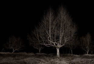 Twilight's Path #019