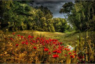 Stroll in Poppyfield