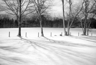Winter Tree Line and Shadows