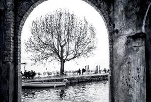 Tree at Lake Garda
