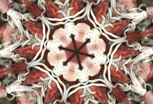 Kaleidoscope n. 1 - Octopus