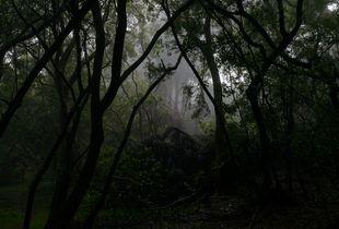 "Trail to Kalaupapa, 2014 (excerpt from the series ""Molokai"")"