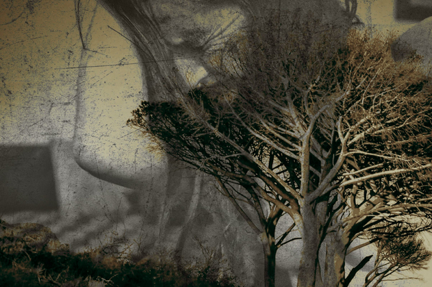 UPROOTED AND FADING - FROM THE SERIES HANGING OUT