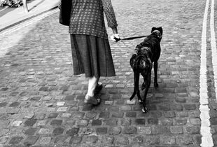 """Dog Meets Bird"",   Digital Photography."