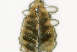 Leaf No. 15