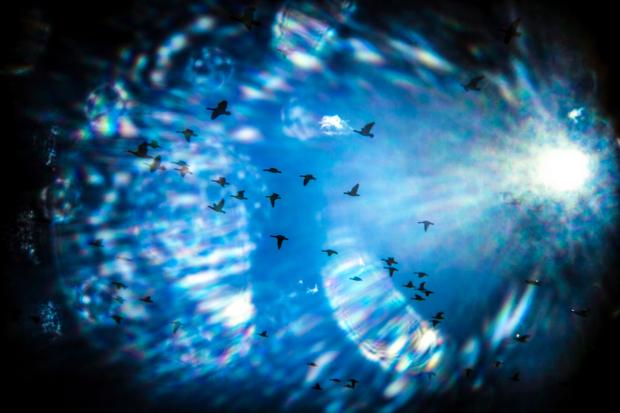 Merbirds