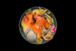 Vanitas (in a Petri dish) 08