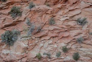 Utah Rock Chips, Utah.