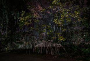 Dark Tree 1