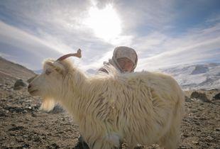 Diskit, The Shepherdess