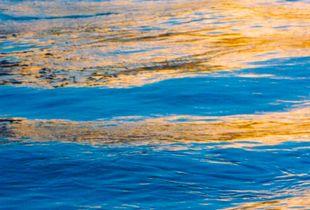 Shape of Water 7
