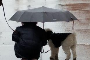 """Rainy day""  Brooklyn"