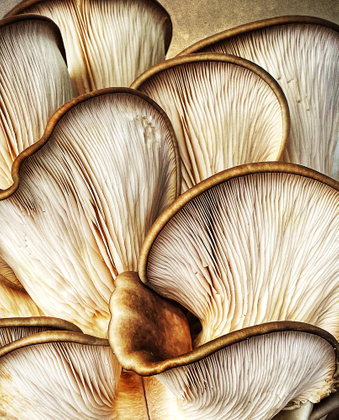 The Art of Fungi