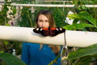 Butterfly vs. Biologist