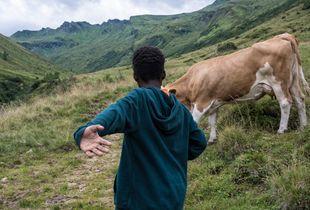 Cow boy, Austrian Alps