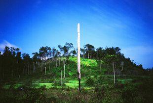 Blue Jungle 002, 2005, Archival Pigment Print