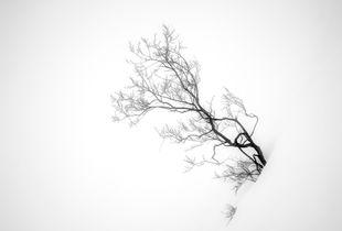 Spectral tree