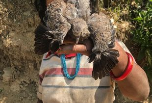 Tamang woman with bird