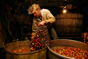 The cider apples are washed in water