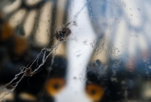 揚羽蝶と蜘蛛の巣