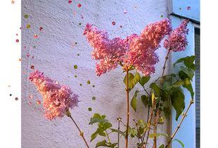 Dusk Lilacs
