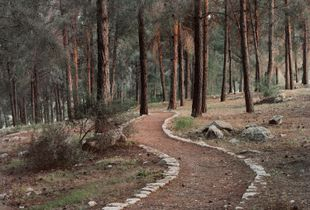 Bricks Trail, Ein Zeitim, Galilee, 2013