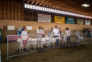 Know Your Goats: Goat Fanciers of Peninsular Saanich 1