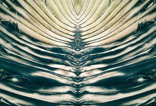 Mirror Palm