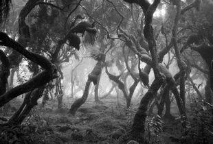 Harenna Forest I