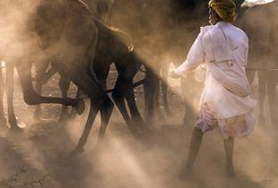 Camel Wrangler