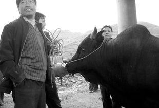 Guizhou, China, 2008