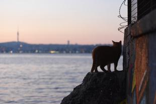 The Bosphorus and Cat