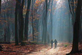 Autumn Walk - light and shadow