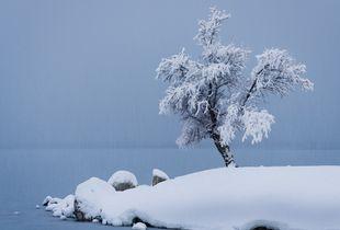 Lone Snowy Tree