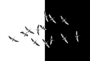 1.Volando Entre Dimensiones