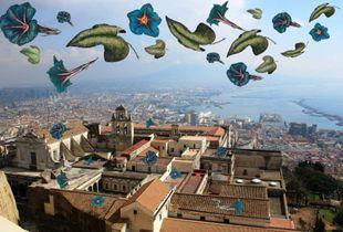Flowers on San Martino - Napoli