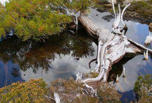 Tasmnia wilderness