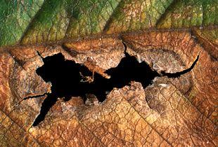 Leaf decay #17