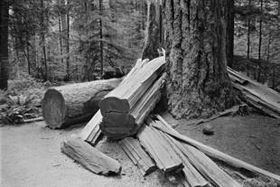 Cathedral Grove, MacMillan Provincial Park, Vancouver Island, Canada, 1994
