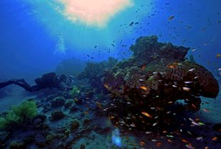 Coral Reefs of Eilat