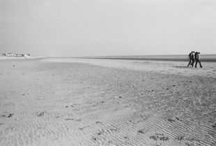LINES OF FORCE:  CAMBER SANDS