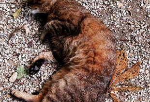 Stray Cats_29
