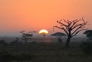 Sabana sunset