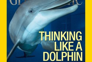 """Thinking Like a Dolphin."" Cover, May 2015."