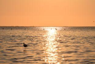 Flamingos Bathing at Dusk Part 1