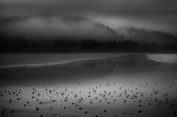 Seagulls in Yachats