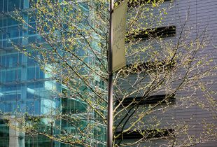 Urban trees, Urban & Street Photography, Landscape Photography, Documentary Photography. © Irena Siwiak Atamewan