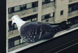 Urban Fauna