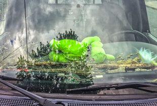 Green Stuffy