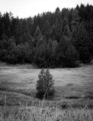 Lonesome pines
